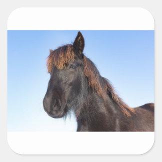 Portrait head of black Frisian horse Square Sticker
