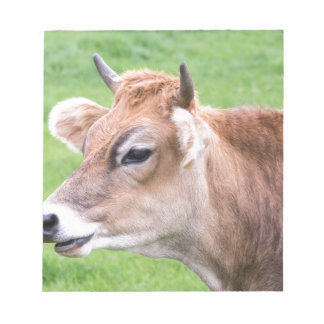 Portrait head of horned brown cow notepads