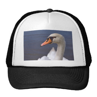 Portrait mute swan cap