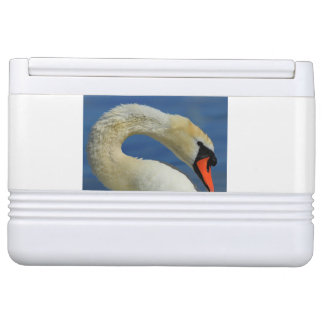 Portrait of a beautiful swan cooler