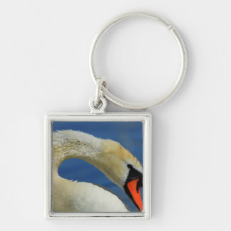 Portrait of a beautiful swan key ring