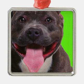 portrait of a bulldog Silver-Colored square decoration