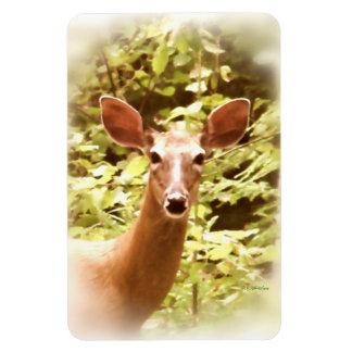 Portrait of a Deer Rectangular Photo Magnet