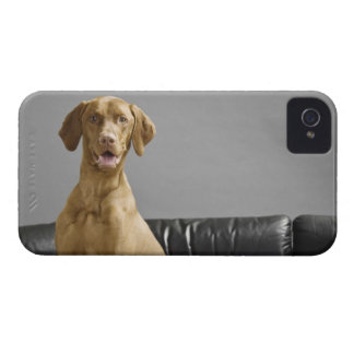 Portrait of a dog iPhone 4 cover