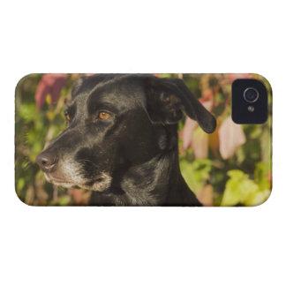 Portrait Of A Dog iPhone 4 Case-Mate Case