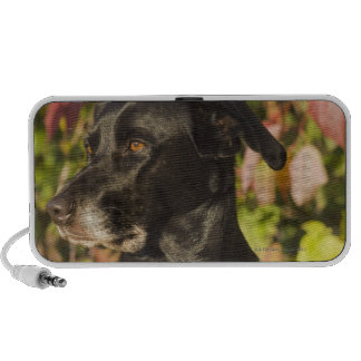 Portrait Of A Dog Portable Speakers