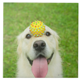 Portrait of a dog with a ball on its nose ceramic tile