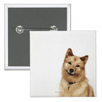 Portrait of a Finnish Spitz dog smiling 15 Cm Square Badge