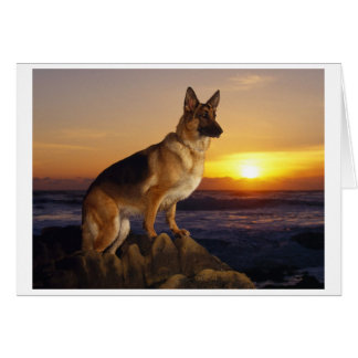 Portrait of a German Shepherd dog or Alsatian Card
