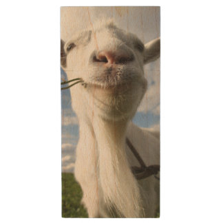 Portrait Of A Goat Eating A Grass On A Green Wood USB 2.0 Flash Drive