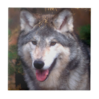 Portrait of a gray wolf ceramic tile