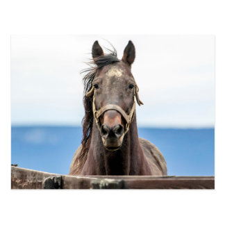 Portrait of a horse postcard