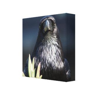 Portrait of a magical Raven Canvas Print