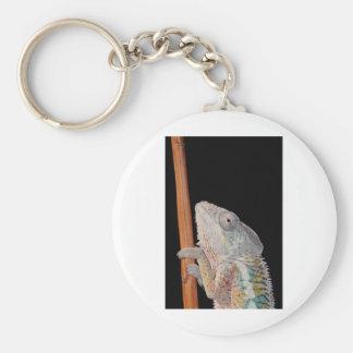 portrait of a male panther chameleon (furcifer par basic round button key ring