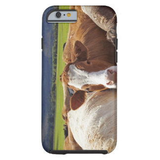 Portrait of a pair of cows in field in the tough iPhone 6 case