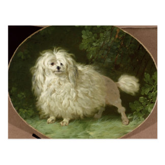 Portrait of a Poodle Postcard