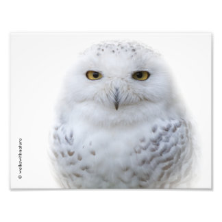 Portrait of a Snowy Owl Art Photo
