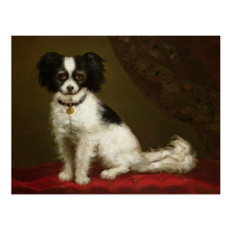 Portrait of a Spaniel Postcard