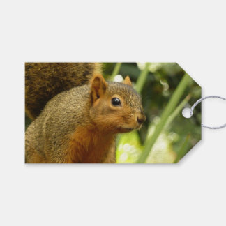 Portrait of a Squirrel Nature Animal Photography Gift Tags