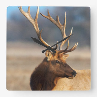 Portrait of a stunning bull elk square wall clock