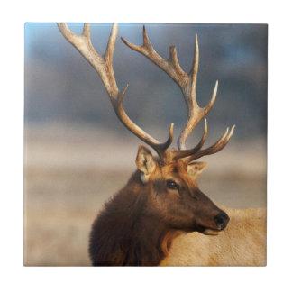 Portrait of a stunning bull elk tile