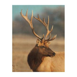 Portrait of a stunning bull elk wood wall art