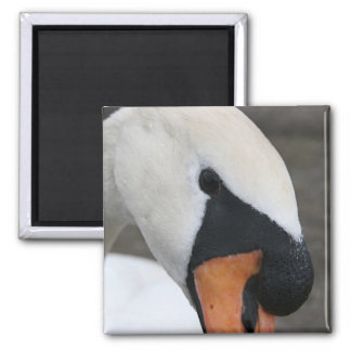 Portrait of a swan square magnet