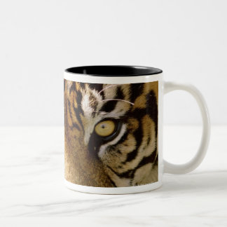 Portrait of a tiger Two-Tone coffee mug