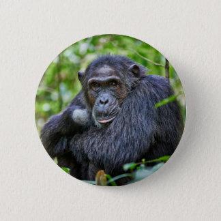 Portrait of a wild chimpanzee 6 cm round badge