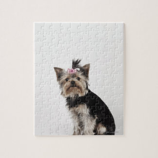 Portrait of a Yorkshire Terrier dog Puzzles