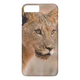 Portrait Of A Young Male Lion (Panthera Leo) iPhone 7 Plus Case