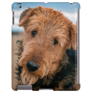 Portrait of an Airedale Terrier 2