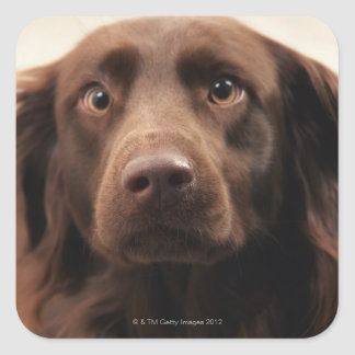 Portrait of an apprehensive young female square sticker