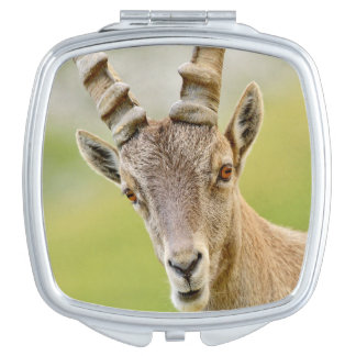 Portrait of an ibex compact mirror