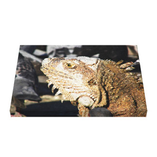Portrait of an iguana canvas print