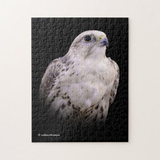 Portrait of an Inquisitive Saker Falcon Jigsaw Puzzle