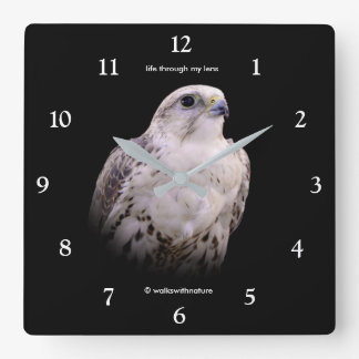 Portrait of an Inquisitive Saker Falcon Square Wall Clock