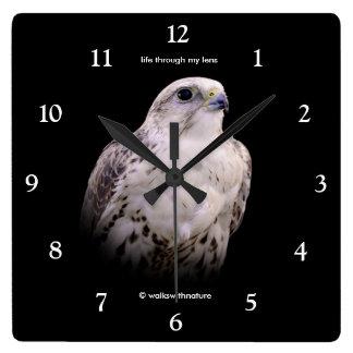 Portrait of an Inquisitive Saker Falcon Square Wall Clock
