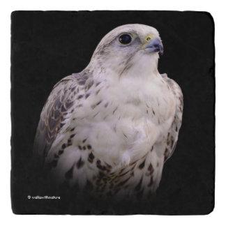 Portrait of an Inquisitive Saker Falcon Trivet