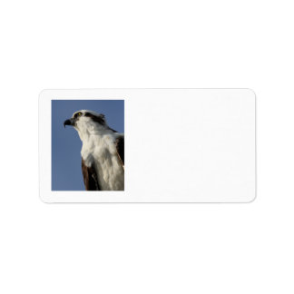 Portrait of an osprey address label