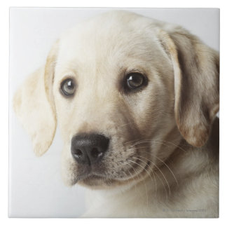 Portrait of blond Labrador Retriever Puppy Ceramic Tile