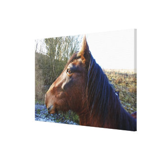 Portrait of brown horse on cold day staring into stretched canvas prints