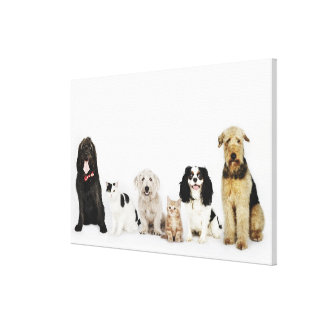 Portrait of cats and dogs sitting together gallery wrap canvas
