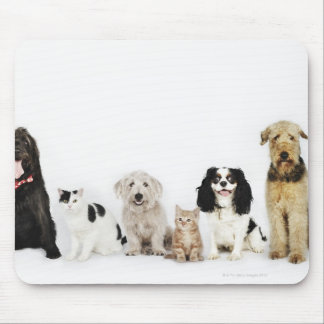 Portrait of cats and dogs sitting together mouse pads