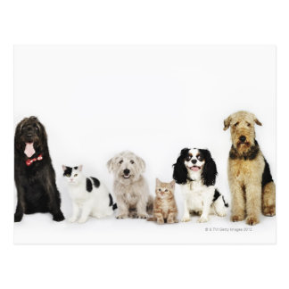 Portrait of cats and dogs sitting together postcard