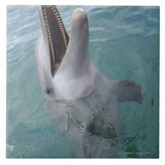 Portrait of Common Bottlenose Dolphin, Caribbean Ceramic Tile