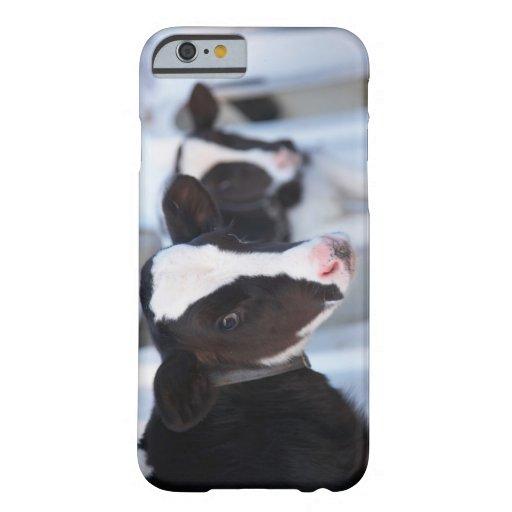 Portrait of cow iPhone 6 case