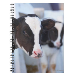 Portrait of cow notebook