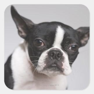 Portrait of dog square sticker