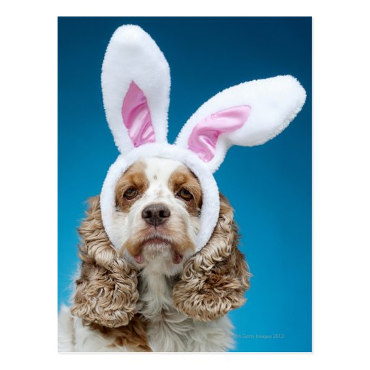 Portrait of dog wearing Easter bunny ears Postcard